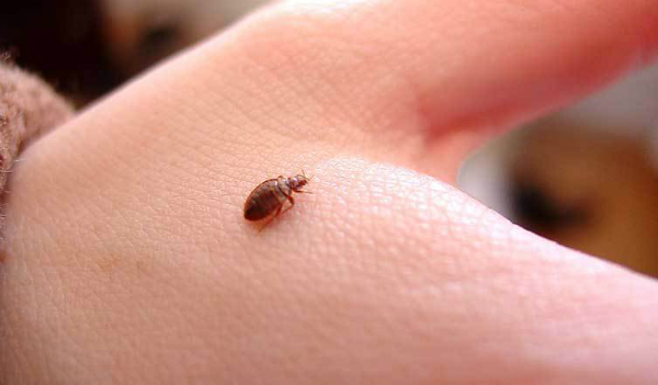 bed bug bombs and foggers
