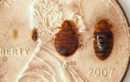 bed bugs extermination average cost